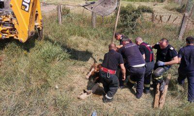 Pompierii au salvat un cal care cazuse intr-un canal