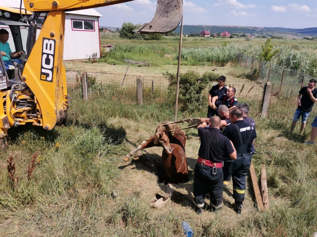 pompierii au intervenit pentru salvarea unui cal